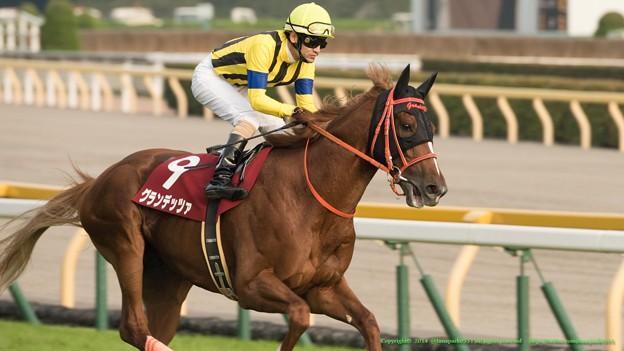 京都金杯2015 出走予定馬の分析グランデッツァら