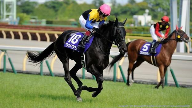 京都牝馬ステークス 2015の出走予定馬ウリウリら分析です