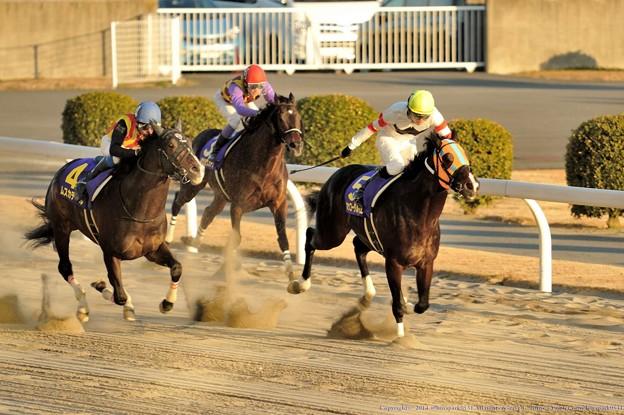 川崎記念2015 予想ホッコータルマエの相手はアノ馬!