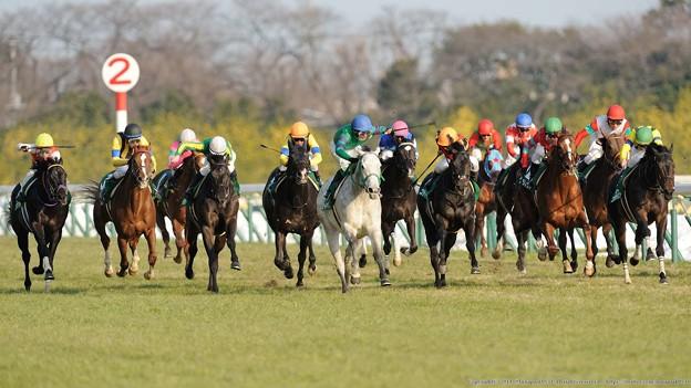 東京新聞杯 2015の予想はあのレースの出身馬がオススメ
