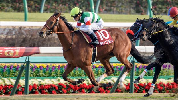 弥生賞 2015の出走予定馬シャイニングレイら分析です