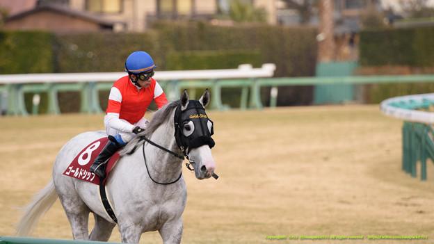 阪神大賞典 2015の出走予定馬ゴールドシップら