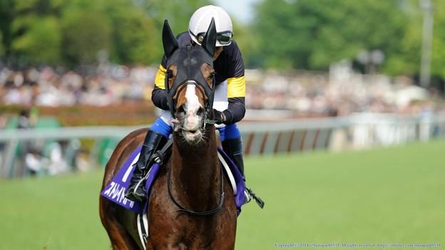 高松宮記念 2015の出走予定馬ストレイトガールら