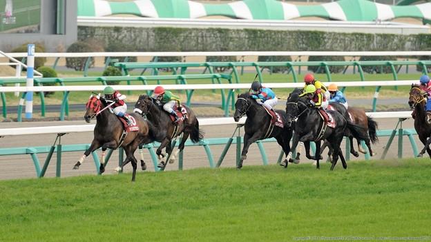 日経賞 2015の出走予定馬フェノーメノの巻き返しはあるか