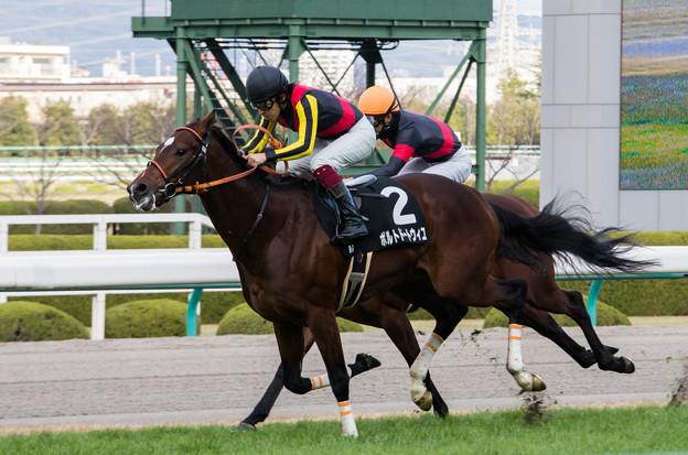 京都新聞杯 2015の出走予定馬ポルトドートウィユら分析です