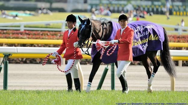 ヴィクトリアマイル2015 予想は牝馬限定重賞はとにかくコレ