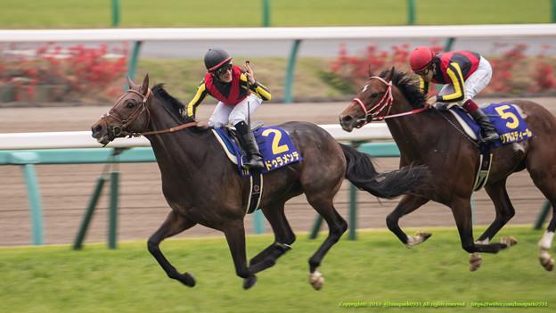 日本ダービー 2015の出走予定馬ドゥラメンテの2冠は濃厚なのか