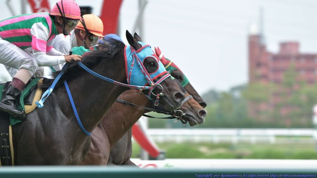 中京記念2015出走予定馬レッドアリオンの分析など
