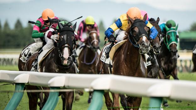 アイビスサマーダッシュ2015予想で外枠有利は馬による
