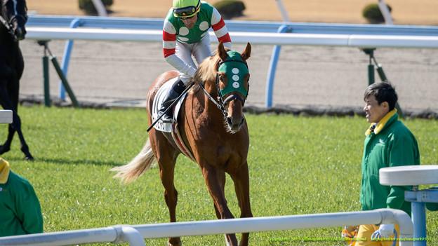 北九州記念2015で出走予定馬と1週前予想です