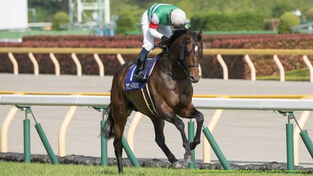 新潟記念2015は出走予定馬と1週前予想です