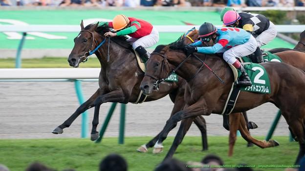 札幌2歳ステークス2015の出走予定馬と1週前予想です