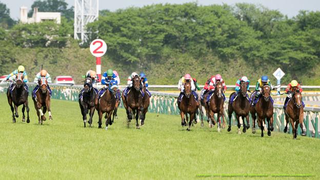 新潟記念2015予想で芝ハンデ重賞の前走1着馬