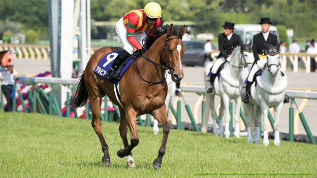 京成杯オータムハンデ2015の出走予定馬と1週前予想です