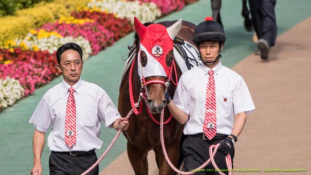 神戸新聞杯2015の出走予定馬と1週前予想です