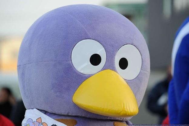 オーバルスプリント2015予想は浦和のダートグレード競走