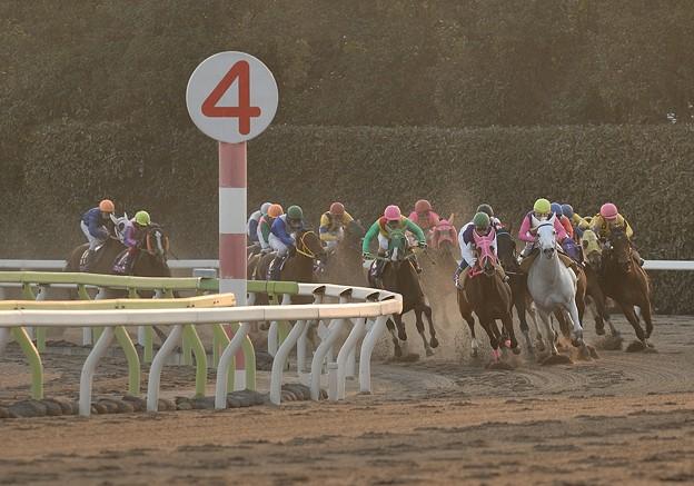 レディスプレリュード2015の予想は牝馬限定のダートグレード