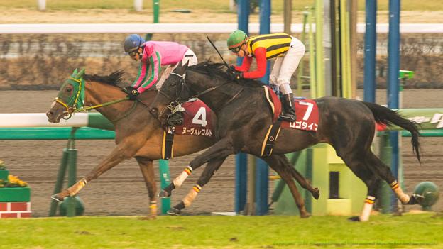 オールカマー2015の出走予定馬と1週前予想です
