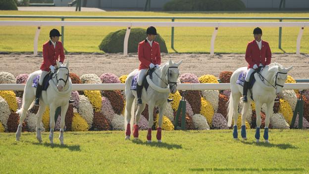 秋華賞2015の出走予定馬と1週前展望です