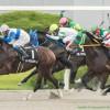 【室町ステークス2015予想】京都ダート1200mのオープン特別