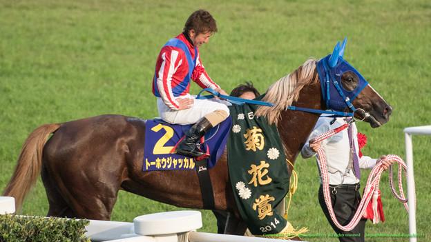 菊花賞2015予想考察でフジワラタツヤさんの立場を考えてみた