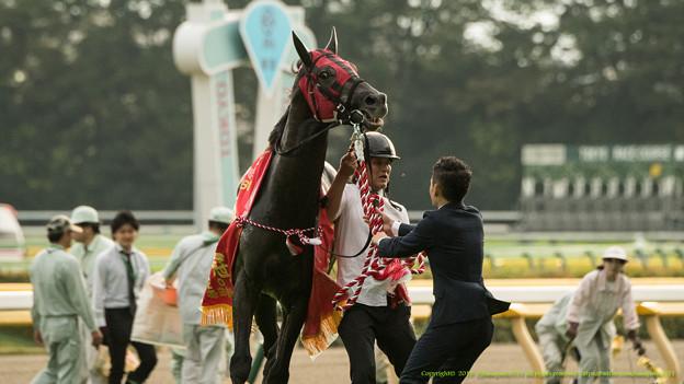 天皇賞(秋)2015の予想考察で騎手から展開を読んでみる