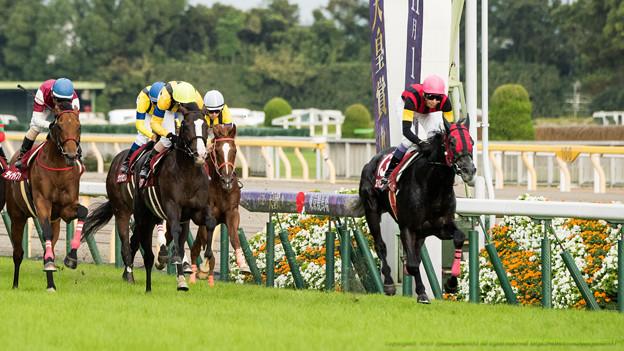 天皇賞(秋)2015の出走予定馬と1週前展望です