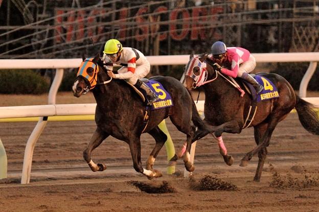 JBC2015の予想考察と出走予定馬と騎手など