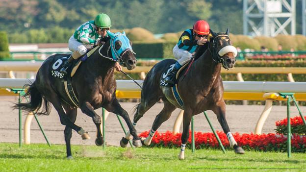 京王杯2歳ステークス2015予想考察は底が見えた馬を買おう