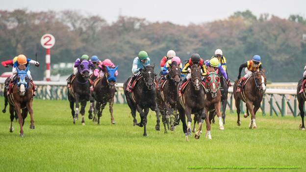 アルゼンチン共和国杯2015の出走予定馬と1週前展望です