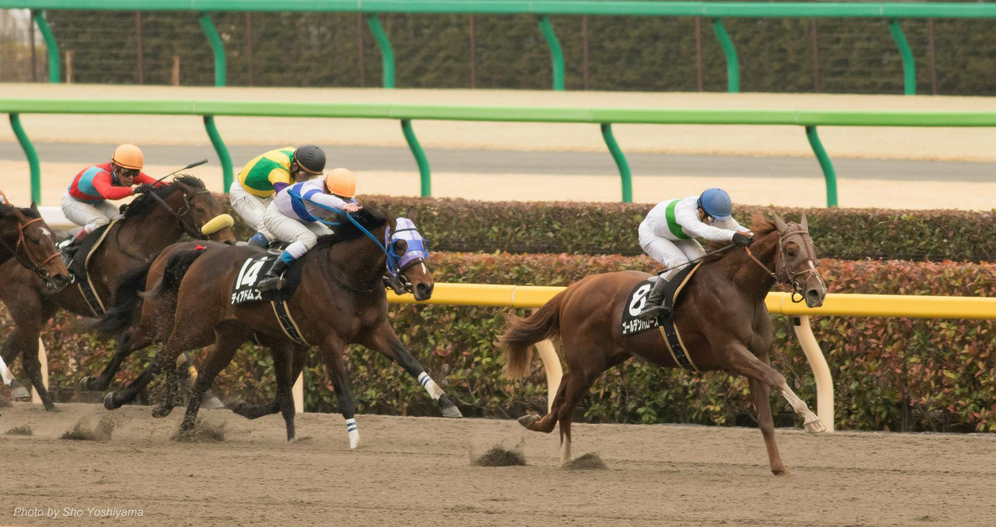 武蔵野ステークス2015は出走予定馬と1週前展望です