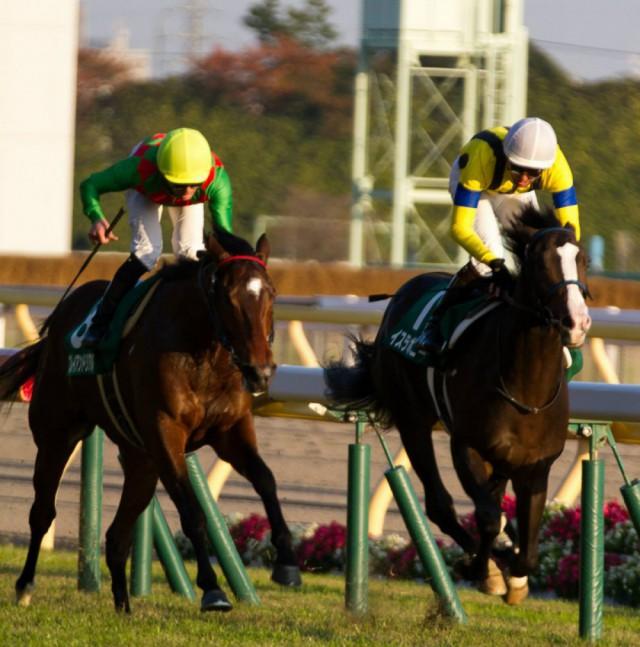 東京スポーツ杯2歳ステークス2015の出走予定馬と1週前展望です