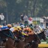 【東京スポーツ杯2歳ステークス2015予想考察】無敗馬の評価