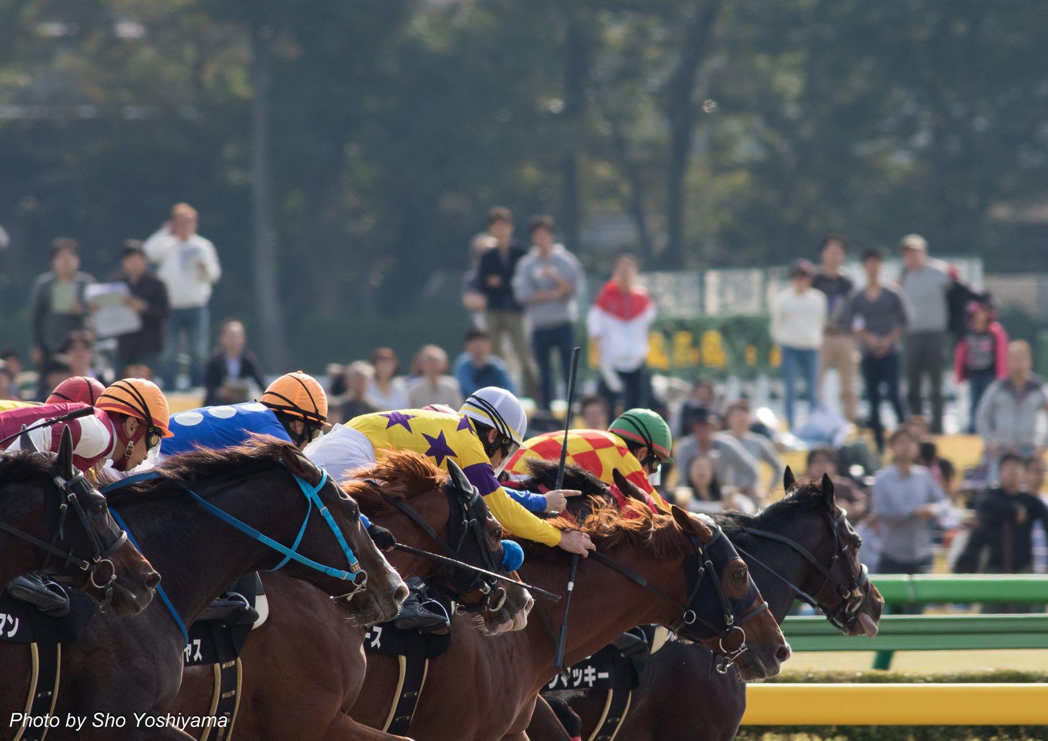 東京スポーツ杯2歳ステークス2015予想考察で無敗馬の評価
