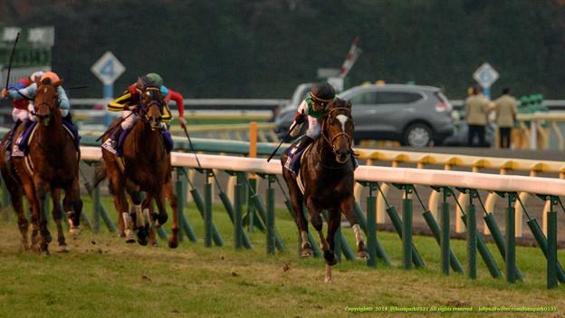 ジャパンカップ2015の枠順が確定!日本馬は外国馬はどの枠に!?