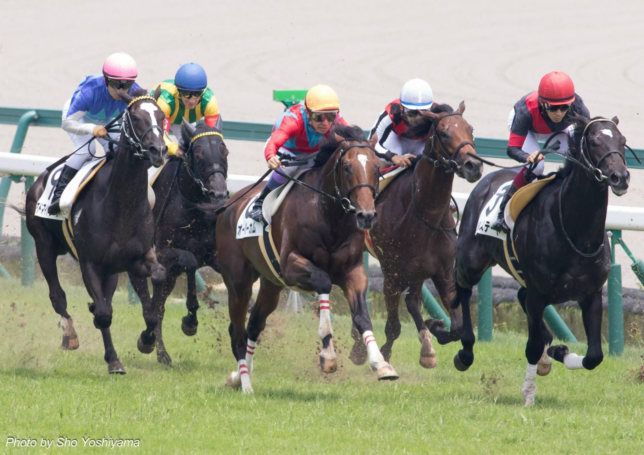 阪神ジュベナイルフィリーズ2015の出走予定馬分析と1週前展望です