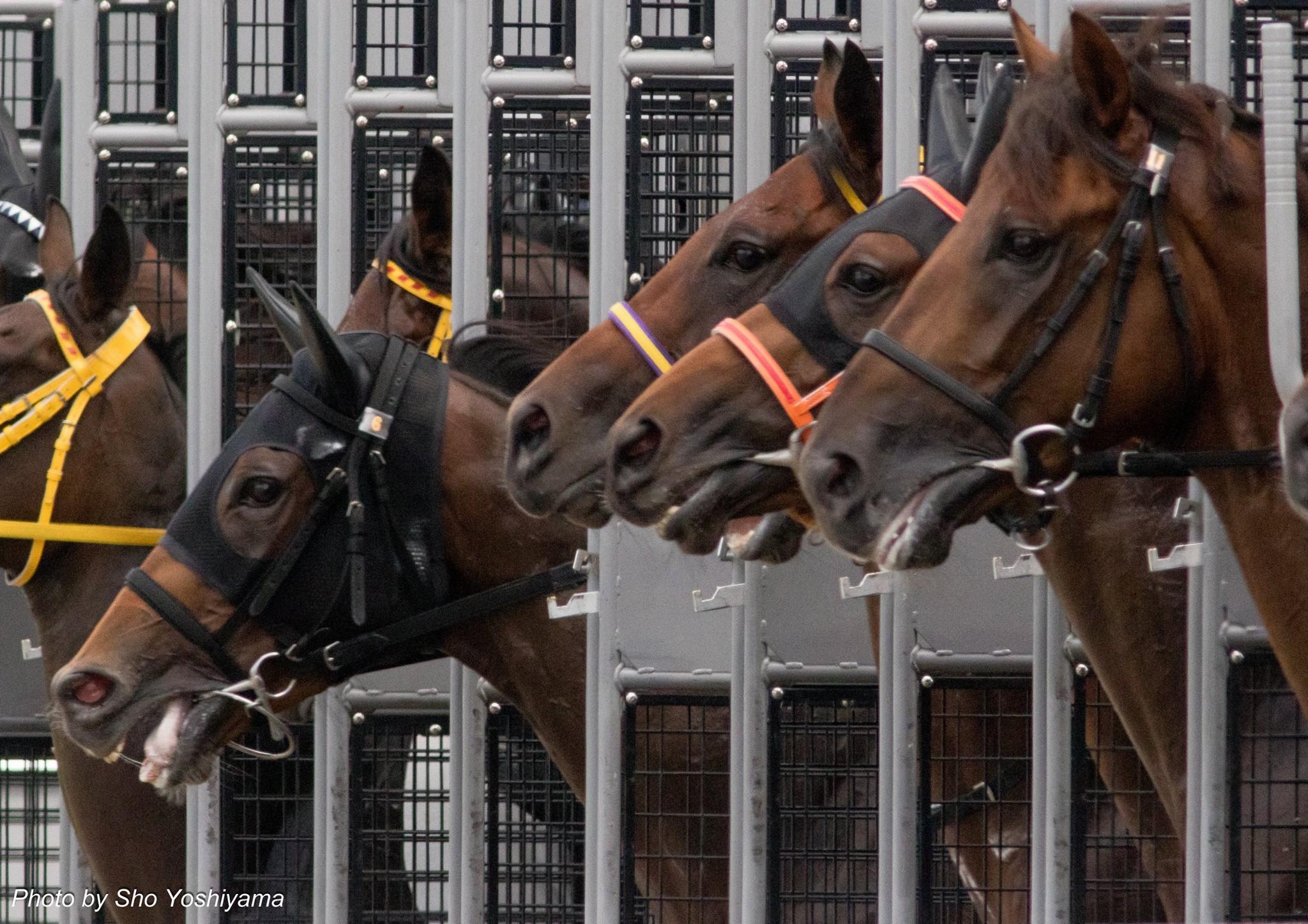 阪神ジュベナイルフィリーズ2015予想参考はあえて短距離馬を狙う