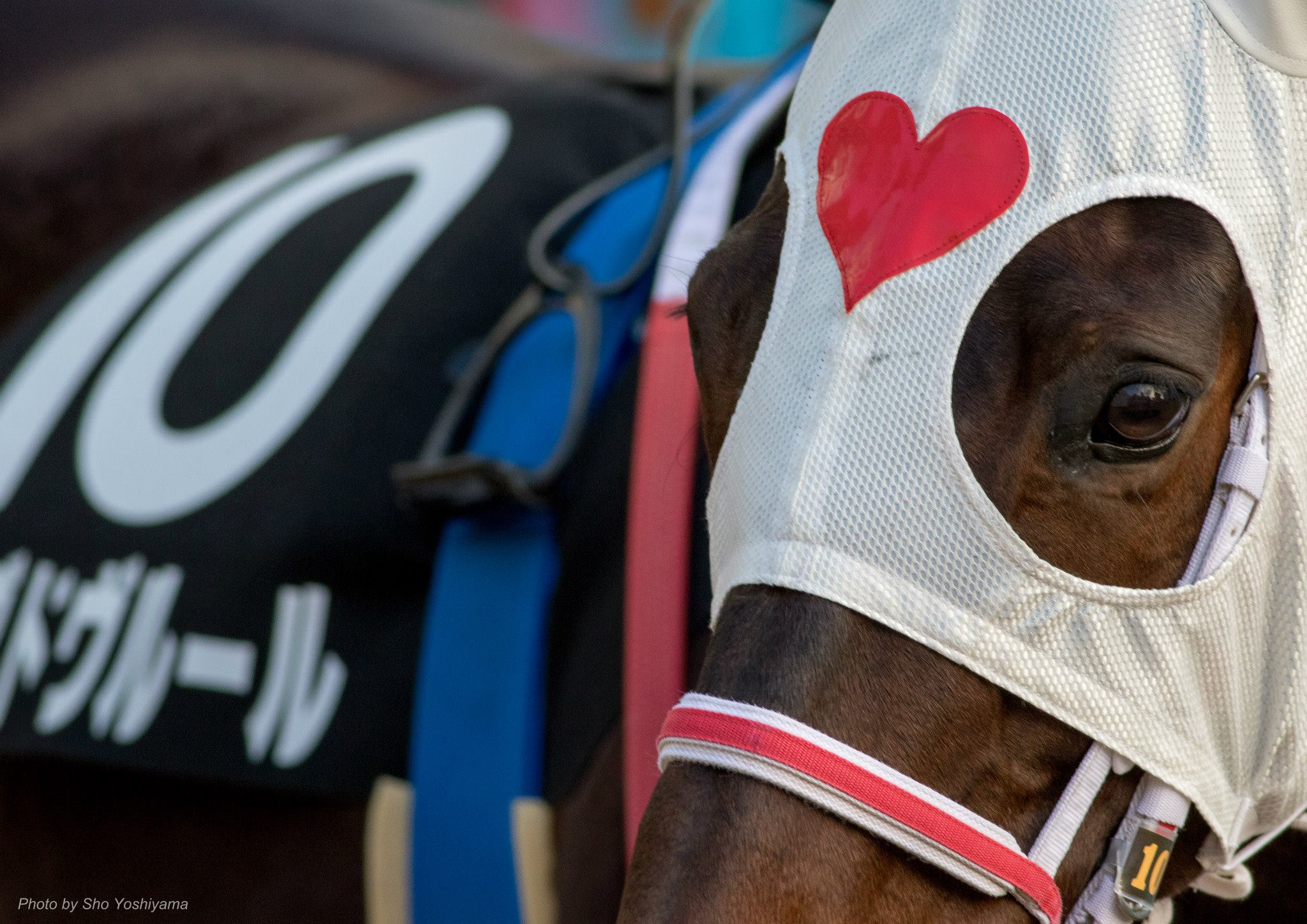 フェアリーステークス2016予想参考は強い馬を見抜けるか