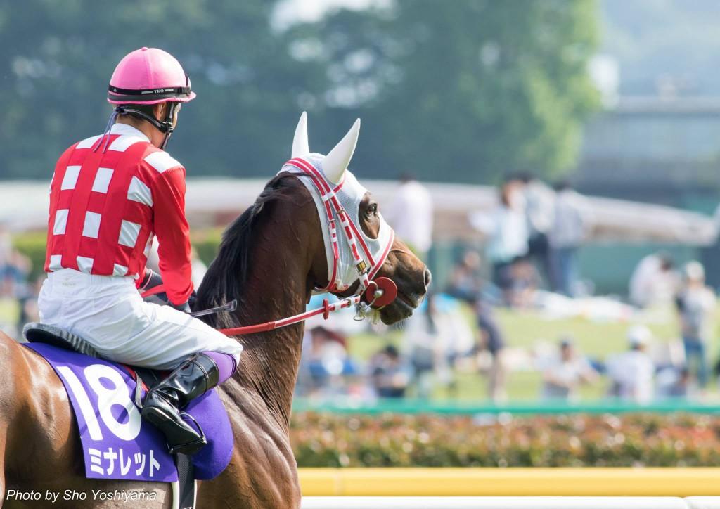 京都牝馬ステークス2016予想参考は古馬の牝馬限定重賞