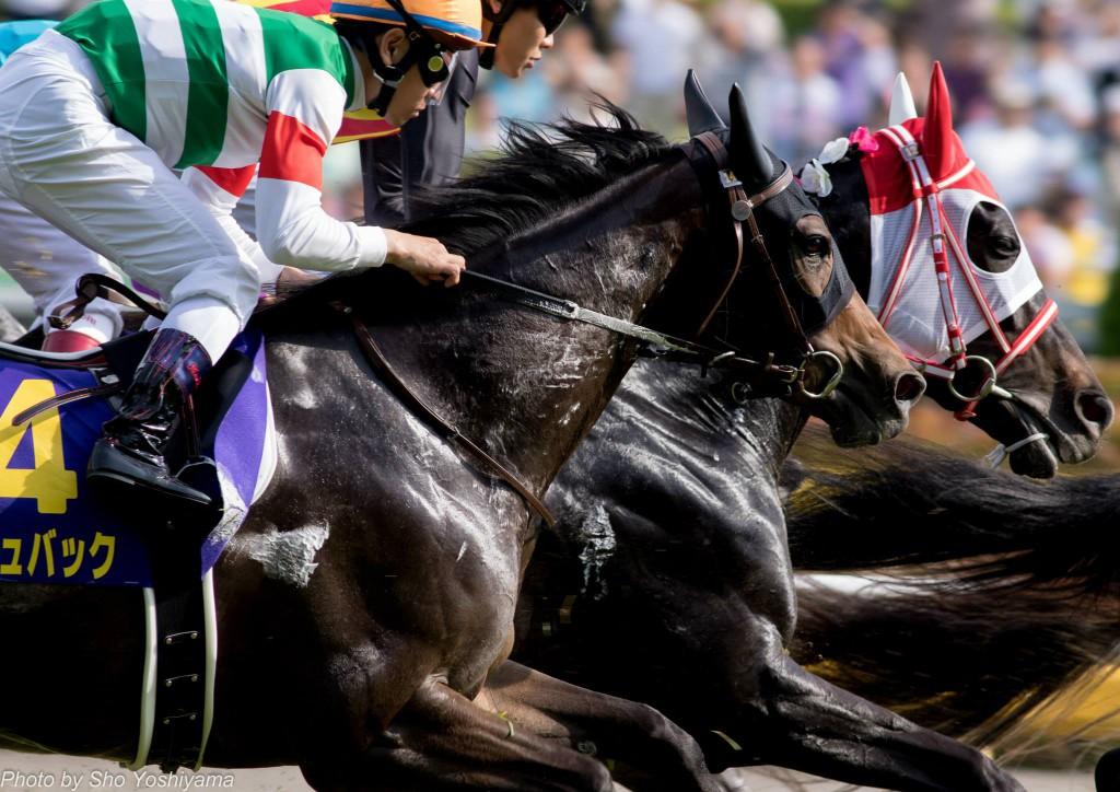【中山牝馬ステークス2016予想参考】ルージュバックらが出走予定