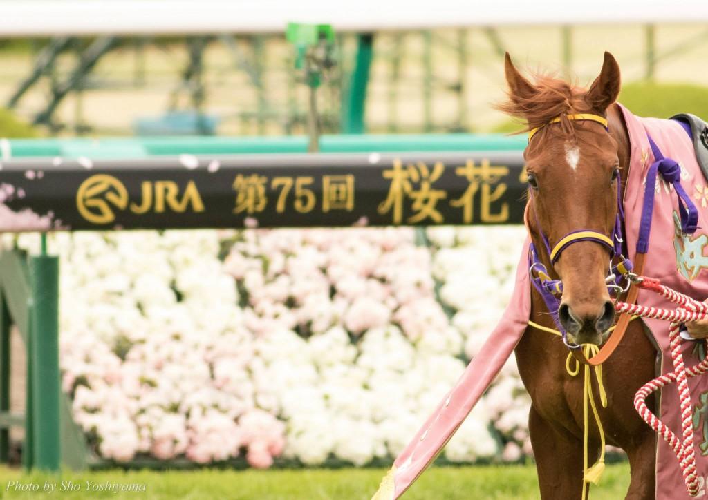 【桜花賞2016予想】ラベンダーヴァレイの一角崩しに期待