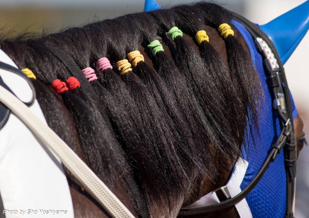 【福島牝馬ステークス2016予想】例年通り立ち回りと枠重視で