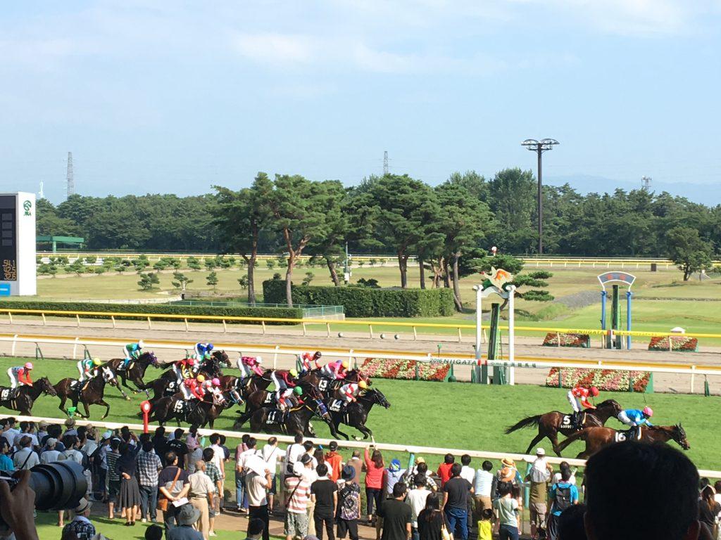 金沢競馬場で協賛レース「ゆたぽん記念」を開催いたします!