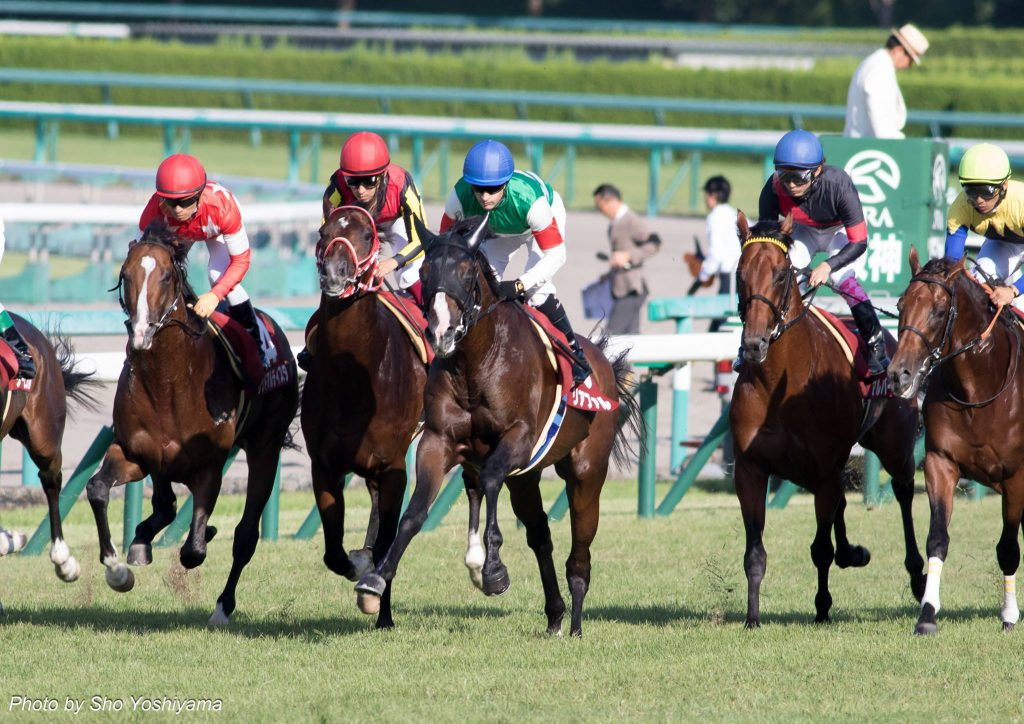 【神戸新聞杯2016予想考察】サトノダイヤモンドらが出走予定